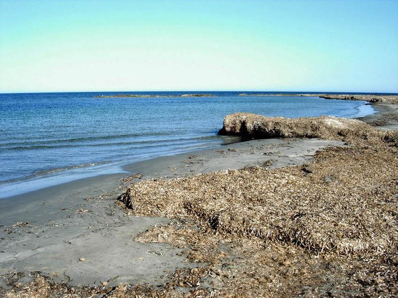 algas-playa