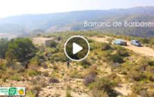 Vídeo-resum de la reforestació al Barranc de Barbàsena